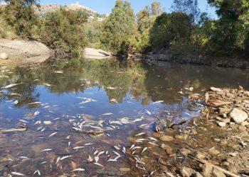 Imagen del Río Hozgarganta facilitada por los ecologistas