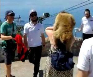 Un mono roba a una turista en Gibraltar.