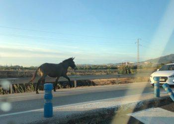 Uno de los caballos, en la calzada.