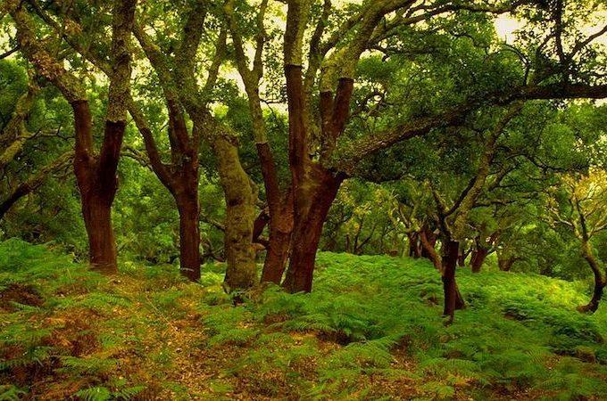 Parque Los Alcornocales. Archivo
