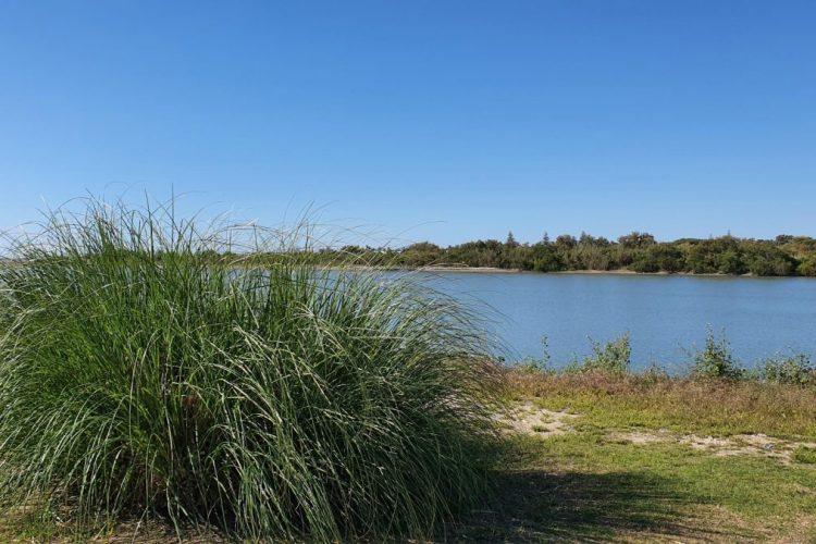plumero en el río Guadiaro